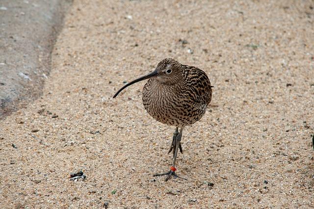 הציפור הלאומית של ניו זילנד